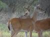 on-feet-doe-buck-557