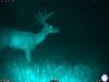 buck-02226