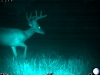 buck-2224