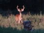 August 7 Buck and BuckEye Pics