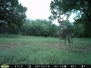 Scouting Deer - Moultrie Pics Sept 8-15