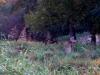 01-doesinwoods2