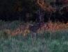 02-buckinwoods-1