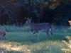10-buck-fawns-417