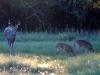 11-buck-8-pt-fawns-418