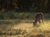20-buck-woods-feeding-441