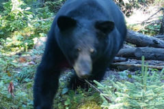 What Makes a Bear Hunter?