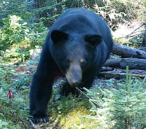 What Makes a Bear Hunter?