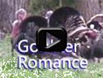 Gobbler Romance