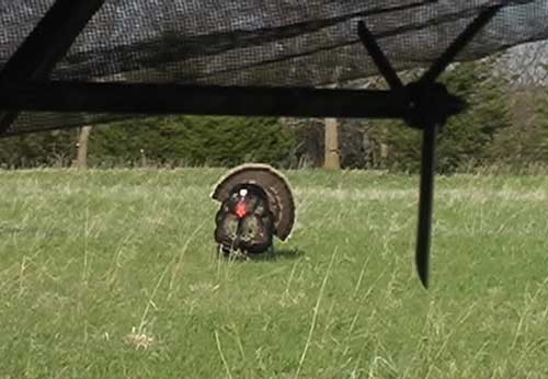 Turkey Hunting Tips & Tactics #2