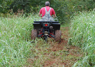 Food Plots Made Easy on a Small Budget