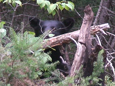 Bear Hunt – Fred, Part 2