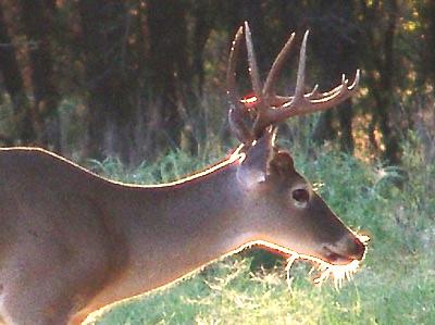 Scouting Deer on Sept 30: Oh Boy