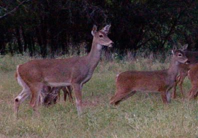Deerhunt Oct 19: Morning