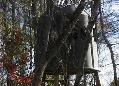 Heartland Hunt: Hanging Tough