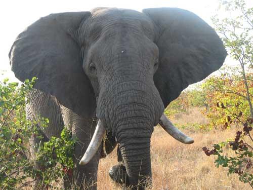 Join Wade Nolan's African Adventure Safari