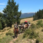 Horseback is the best way to get back into the area where the bulls hang out.
