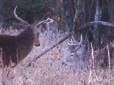Hot Doe Buck Freak Out