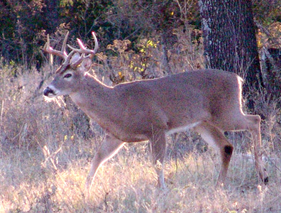 SpyPoint At The Food Plot
