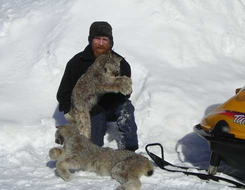 Hunting Canadian Lynx