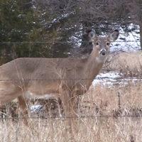 01-deer.doe-01