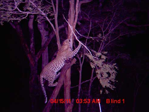 Quest for Africa's Big 5 Hunt 1: Day 6