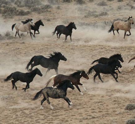 Wild Horses; A Problem