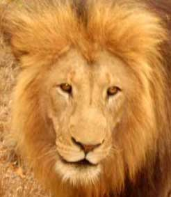 Quest for Africa's Big 5 Hunt 1: Day 12
