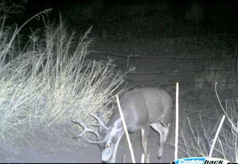 Trophy New Mexico Archery Mule Deer: Part 1