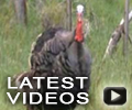 New Bowhunting Videos Added to BHN