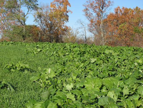 Food Plot Strategy: Know Before You Grow