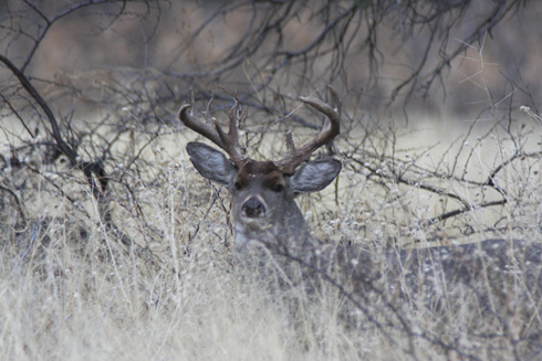 Trophy Whitetails: Increasing Your Odds