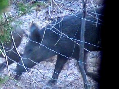 Wild Hogs: Hunt 1