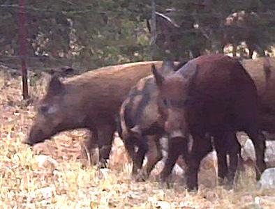 Wild Hogs: Found