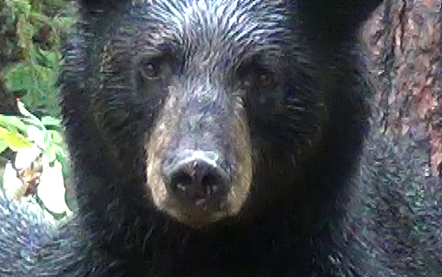 My 2012 Bear Hunt – Day 2