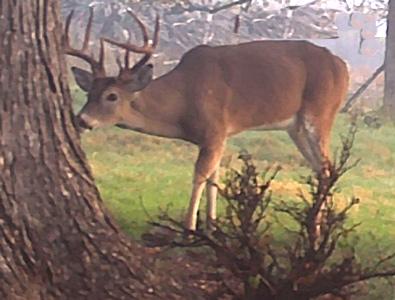 The Un-Dead Buck