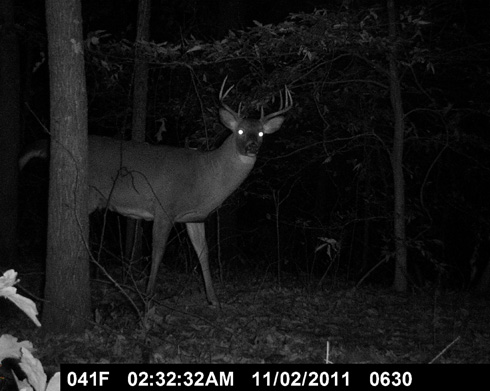 Trail Cams and Boxes of Chocolates