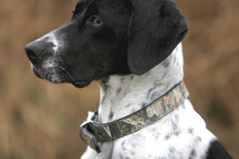 American Leather Klassics Offers Lost Camo Dog Products
