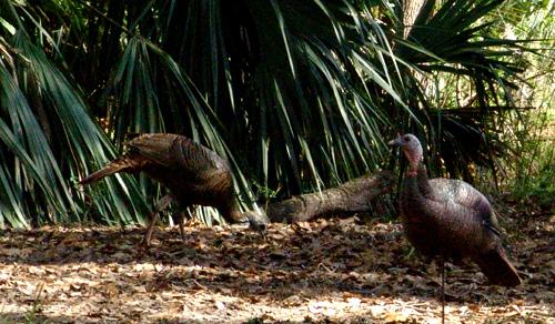 Florida Bowhunt – Day 2