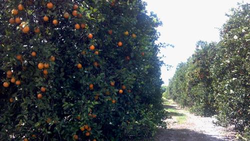 Florida Bowhunt – Day 3 & 4