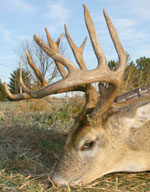 Wikman's Pick – Blue River Whitetails
