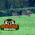 Heartland-Big-Plot-Deer-250