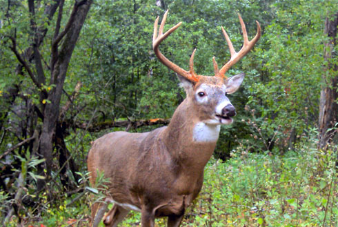 Perfect Practice: Elevating Your Archery Hunting Skill Set