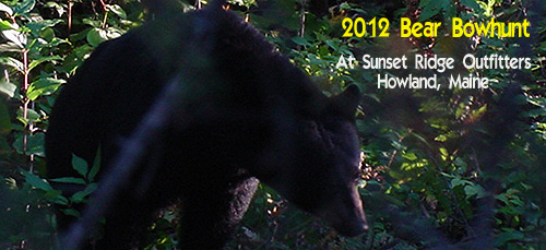 2012 Maine Black Bear Bowhunt