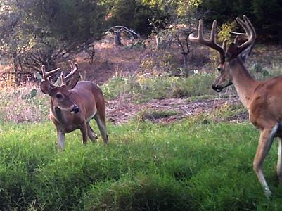 Bucks Around The H2O Water Cooler