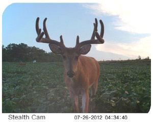 Last Minute Whitetail Hunt DEALS