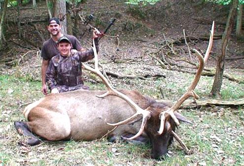 Elk Crazy