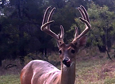 Another New Buck