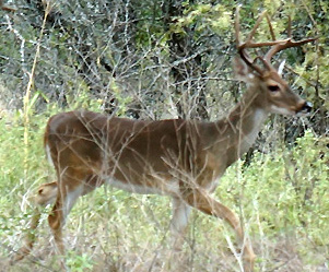 Bucks On The Move