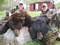 Spring Bear Hunts  – Book Yours Now!
